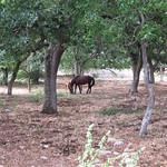 "Horses <a style=""margin-left:10px; font-size:0.8em;"" href=""http://www.flickr.com/photos/14315427@N00/19163829079/"" target=""_blank"">@flickr</a>"