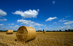 Strorollen (Fred van Bergeijk) Tags: color contrast boer blauw harvest straw crop roll hay agriculture geel drenthe landschap cirkel oogst oogsten hooi zomerdag landbouw landelijk agrarisch gerst perspectief akker wolkjes blauwelucht veevoer stoppels strobaal d7000 strorol