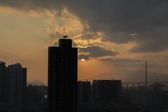 Garden Hill (AlanChenHK) Tags: hongkong gardenhill sunset highrisebuilding city nightview 5dmarkiv 241054lii kowloon shamshuipo crowdy skyscraper
