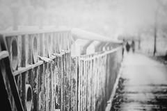 ...heartbeated... (*ines_maria) Tags: outdoor fog misty heartbeat panasonicdmxgx8 dof dephtoffield heart love couple fence hff