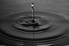 Drop (RobMacPhotography) Tags: canberra act australia black white water drop drip ripples sink contrast rob mac photography sony a6000 indoors