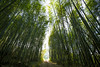 bamboo tunnel (Olen photo) Tags: taiwan chiayi mountain train green blue sky cloud sunny day tea travel canon 500d tokina t116