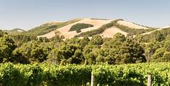Waratah Hills vineyard and view (laurie.g.w) Tags: waratah hills view south gippsland victoria fish creek prom country australia hill landscape vineyard