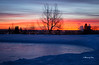 Calgary sunrise (Canon Queen Rocks (1,230,000 + views)) Tags: scenery scenic sunrise reds colours canada calgary ice snow frozen frost winter dawn alberta trees silhouettes outdoors sky