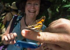 L1060577.jpg (gpparker) Tags: iguaçu iguassufalls butterfly brazil