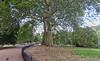 UK 2016 726 (Visualística) Tags: uk unitedkingdom reinounido gb granbretaña greatbritain england inglaterra ciudad city stadt urbano urban parque park london londres londra