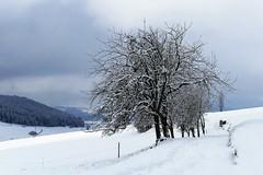 Winter auf dem Möschberg Oberthal (Martinus VI) Tags: grosshöchstetten möschberg winter winterlandschaft hiver schnee nieve snow neige kanton de canton bern berne berna berner bernese schweiz suisse svizzera suiza switzerland y150222 martinus6 martinusvi