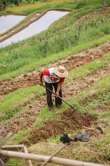 IMG_4385 (FelipeDiazCelery) Tags: indonesia bali asia arroz rice ricefields composdearroz agricultura griculture wrok worker trabajdor granjero granja farm farmer