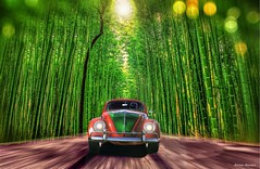 Volkswagen Beetle 1963 (@Britney Beyonce) Tags: automobile auto car worldcars germanycars volkswagen beetle photoshop forza6 hdr classiccar bamboo forest japan kyoto pixabay platinumheartaward