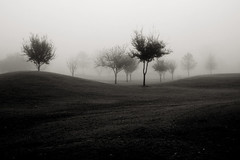 undulate (slight clutter) Tags: park morning trees blackandwhite bw mist nature horizontal fog sunrise landscape bravo solitude texas houston gazebo topf300 iloveflickr hermannpark slightclutter before8am undulate diggingthrougharchives fogography katyahorner slightclutterphotography
