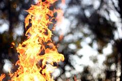 Flame (Kent Holloway) Tags: fire 300d canon300d flame burn digitalrebel frozenfire