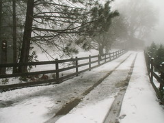 snowy driveway (I, Puzzled) Tags: winter snow fog pinetree pine fence landscape march snowy country tracks 2006 driveway ipuzzled 200603 20060312 20060312200 scphoto