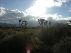 2006.03.12 - desert sun