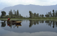 Cleaning the lake (iPhotograph) Tags: india lake reflection wow geotagged boat dal 1983 kashmir srinagar 1on1 dallake ffk geo:lat=3409843741013793 geo:lon=7486004307187325