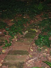 Mossy Path (clive.moses) Tags: garden path mossy dis