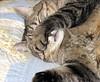 sleeping (maxxcat) Tags: sleeping pet cat zoe commentonmycuteness