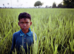 kid in a paddy (ian_taylor_photography) Tags: grass kid cambodia paddy v100 superfantastique v200 iantaylor koknia iantaylorca iantaylorphotography
