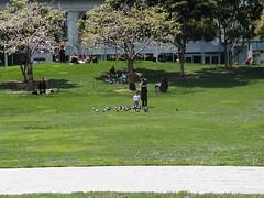 village green preservation society (dannebrog) Tags: sanfrancisco california yerbabuena