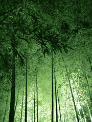 bamboos lit up (Issey*) Tags: travel green japan night kyoto contax kyocera bamboos i4r