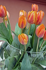 tulips (lomokitty) Tags: street flowers red orange flower macro berlin green rot canon germany deutschland 350d spring tulips blumen 2006 tulip vase grn done blume frhling tulpen tulpe april2006