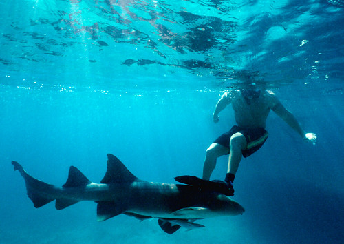 Snorkeler and a Nurse Shark in the Bahamas