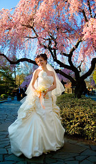 Wedding: Cherry blossom formal (Ryan Brenizer) Tags: nyc newyorkcity pink blue wedding portrait woman newyork green topf25 beautiful brooklyn pretty fuji bestviewedlarge posed 2006 finepixs2pro noflash april 1755mmf28g brooklynbotanicalgardens carpeicthusutatafeature