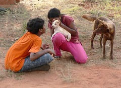 Auroville 011 ---------------------------------------- Romancing the dogs - by Pandiyan