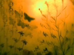 Day's End (Dancing Fish) Tags: light topv111 wow moth dream dreamy myfavouritelampshade viewedthroughaflyeye