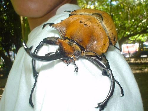 mi linda Costa Rica... 133056154_9ed82ec7ff
