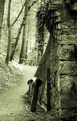 In the mood (Andreas Reinhold) Tags: trees blackandwhite bw white black wall forest mood stones steine sw wald bume bergischesland stimmung mauer mettmann neandertal