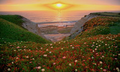 Earth Day Embrace (jurvetson) Tags: ocean sunset sun beach topf25 soleil day earth wideangle iceplant 500plus20 creativecommons 24mm blooms tidepools halfmoonbay plage hdr coucherdesoleil earthday hmb intothesun ocan april22 aplusphoto