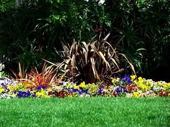 O que eu vi 5 (LuPan59) Tags: flora kodak dx7590 lupan