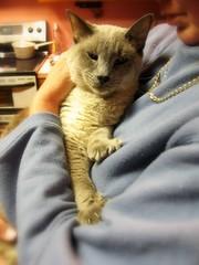 Soaking Up Mommy's Love (Mr. Greenjeans) Tags: blue pet home closeup cat manipulated picasa hff mrgreenjeans gaylon drmodo gaylonkeeling