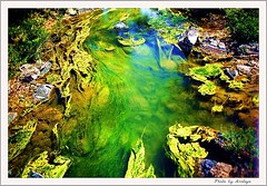 Still life (Araleya) Tags: life travel stilllife plant green art nature ecology landscape nikon colorful vivid kai algae colourful catchycolor lao mekong artisitc artcore natureart naturesfinest aquaticplant waterweed araleya bluelist donkong 25faves aplusphoto diamondclassphotographer flickrdiamond diamonclassphotgrapher