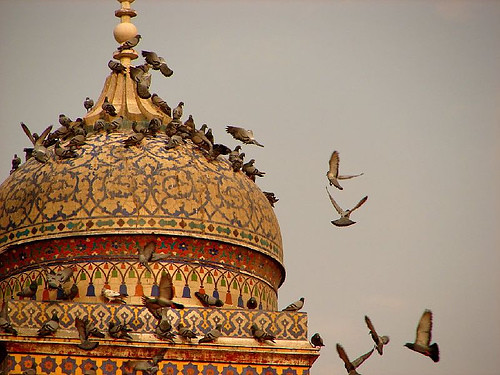 Pigeons on the dome of the Wazir Khan Mosque. by PakPositive.