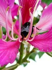 E teje preso ! ! ! (*Tuvy*) Tags: flower brasil jj flor bee quintaflower mamangava tuvy parqueecolgicocampinas flickrbrasil duetos