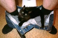 Leeloo Makes Herself at Home 1999 (roadiemon) Tags: chris cat fun bathroom kitten funny leeloo sexylegs hotboxers ccc34