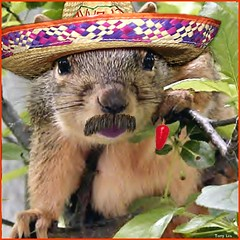 Happy Cinco de Mayo (Terry_Lea) Tags: squirrel squirrels photoshopfun tbas