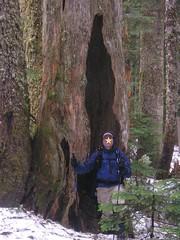 Denny Creek Stump perspective
