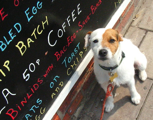 Dog Writes on Blackboard