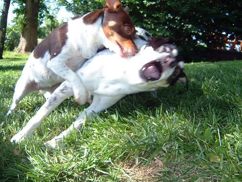 2006-05-13 - DogsOutside0042