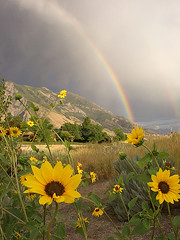 Rainbows and Glowing Sunflowers (janoid) Tags: mountain storm tag3 taggedout utah rainbow tag2 tag1 explore alpine kiss2 thesource supershot kiss3 kiss1 kiss4 specnature kiss5 explore14may06 abigfave fcrnbws