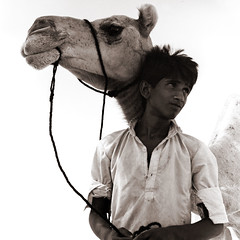 """camel driver • <a style=""""font-size:0.8em;"""" href=""""http://www.flickr.com/photos/53627666@N00/148952448/"""" target=""""_blank"""">View on Flickr</a>"""