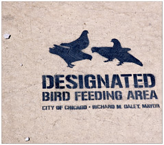 Designated Bird Feeding Area (swanksalot) Tags: chicago bird graffiti us stencil mayor il sidewalk haymarket westloop daley faved chicagoist birdfeeding fav10 swanksalot sethanderson justchicagoart