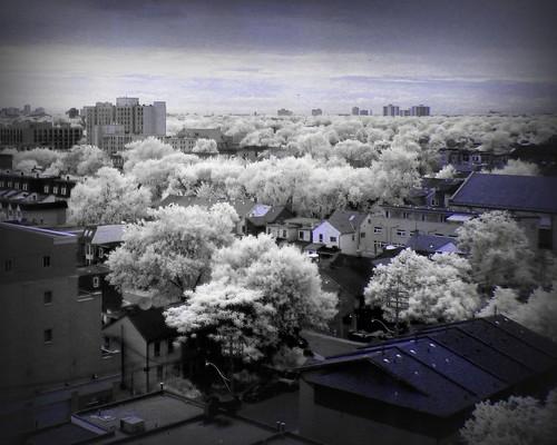 City of trees - Colour IR