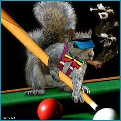 Pool Shark (Terry_Lea) Tags: squirrel squirrels photoshopfun intrigued lovedit tbas