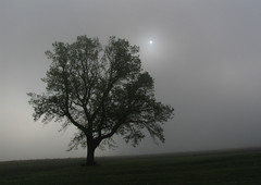 breakingthroughthedawn (Jeremy Stockwell) Tags: summer sky sun mist tree nature fog sunrise dawn indiana lonelytree standout canonpowershots1is fromwindow naturallyblackandwhite jeremystockwellpix iptclightandfog myindianasummer flagsofimaginarycountries