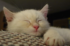 Casper sleeping (lilith penguin) Tags: portrait animal cat photo nap sony albuquerque catnap nm cutecat unedited purrr interestingness182 i500 cc100 explore15jun2006 cmcaug06 ccc44 thebiggestgroupwithonlycats