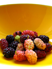 i can taste summer! a.k.a. childhood summer! a.k.a. childhood reminiscence! a.k.a. those were the good times! (bitzi  ion-bogdan dumitrescu) Tags: pink shadow red wild summer food sun black color macro fruits childhood yellow fruit dark happy interestingness juicy yummy big interesting berry glow berries shine sweet shaped egg memories tasty sunny bowl fresh dude delicious nostalgia tiny huge rememberance were glowing times taste top20macro organic top20stills ruby shape sour refreshing those shining reminiscence iunie mulberry mulberries tema interestingness2 refresh morus mullberries 1621 bitzi cotcmostinteresting i500 spselection photodotocontest2 tmafh views10000 top20yellow utata:project=upportfolio gmofree sptmnii bucuriidevar findgetty