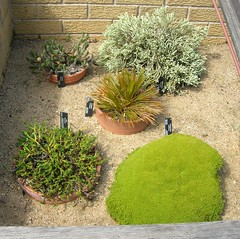 New Zealand Rock Garden Plants - by brewbooks